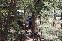 Hermanus Forest Adventures, Hermanus, South Africa