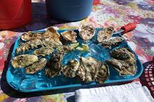 Buck Bay Shellfish Farm, Olga, United States