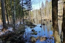 Wharton State Forest, Batsto, United States