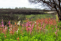 Van Stadens Wild Flower Reserve, Port Elizabeth, South Africa