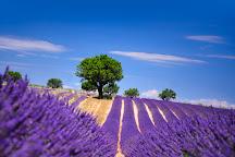 Occitania Provence Tours, Aix-en-Provence, France