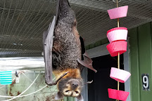 Lubee Bat Conservancy, Gainesville, United States