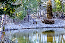 Schlitz Audubon Nature Center, Bayside, United States
