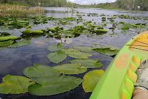 Lake Griffin State Park, Fruitland Park, United States