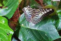 The Butterfly Palace, Branson, United States