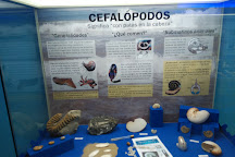 Museo Paleontológico de Elche / Fundación Cidaris, Elche, Spain