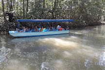 William Mangrove Tours, Quepos, Costa Rica