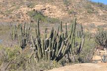 Cactus Tours, Cabo San Lucas, Mexico