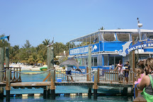 Dolphin Encounters, Nassau, Bahamas