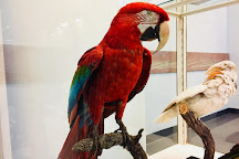 Senckenberg Natural History Museum (Naturmuseum Senckenberg), Frankfurt, Germany