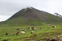 Langhus Farm, Skagafjordur, Iceland