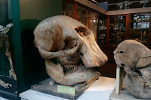 Grant Museum of Zoology, London, United Kingdom