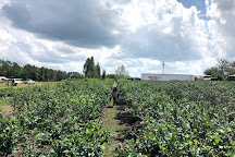 Blueberry Hill Farm, Clermont, United States