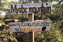 Mystic Mountain Coffee, Paksong, Laos