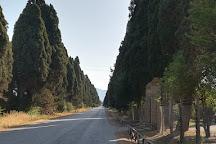 Tenuta San Guido, Bolgheri, Italy