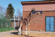 Jyllands Park Zoo, Videbaek, Denmark