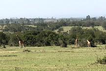 Ol Pejeta Conservancy, Laikipia County, Kenya