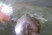 Koggala Sea Turtle Farm & Hatchery, Koggala, Sri Lanka