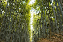 Bamboo Forest Street, Kyoto, Japan