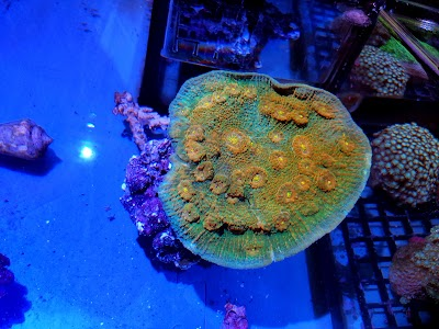 Coral Madness