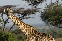 Grumeti River, Serengeti National Park, Tanzania