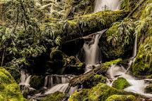 Merriman Falls, Quinault, United States