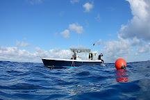 Florida Shark Diving, Jupiter, United States