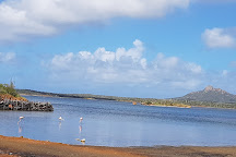 Lake Goto (Gotomeer), Bonaire