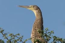 Crooked Tree Wildlife Sanctuary, Belize District, Belize