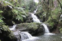 Akaka Falls State Park, Hilo, United States