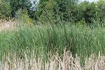 Lake St. Clair Metropark, Harrison Township, United States