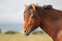 Solvangur Icelandic Horse Center, Eyrarbakki, Iceland