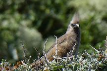 Tuin-op-die-Brak, Stilbaai, South Africa