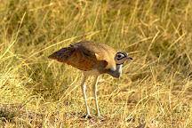 Gaborone Game Reserve, Gaborone, Botswana