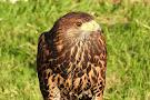 Killarney Falconry