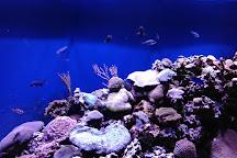 Mote Marine Laboratory & Aquarium, Sarasota, United States