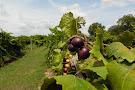 Adams Vineyards