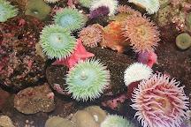 Oregon Coast Aquarium, Newport, United States