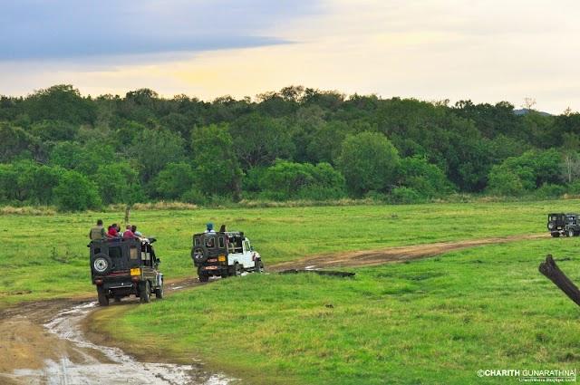 Mahoora Luxury Tented Safari Camp Minneriya