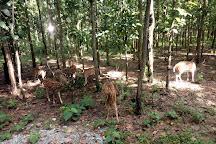 Bengal Safari, Siliguri, India