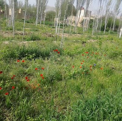 Shirin Tagab