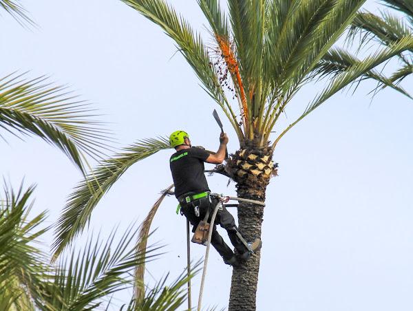 Pembroke Pines Area Tree Services