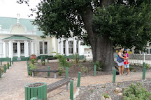 The Old Slave Tree, George, South Africa