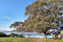 Hippie Tree, Tiburon, United States