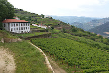 Aneto Wines, Lamego, Portugal
