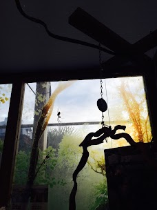Bugs london
