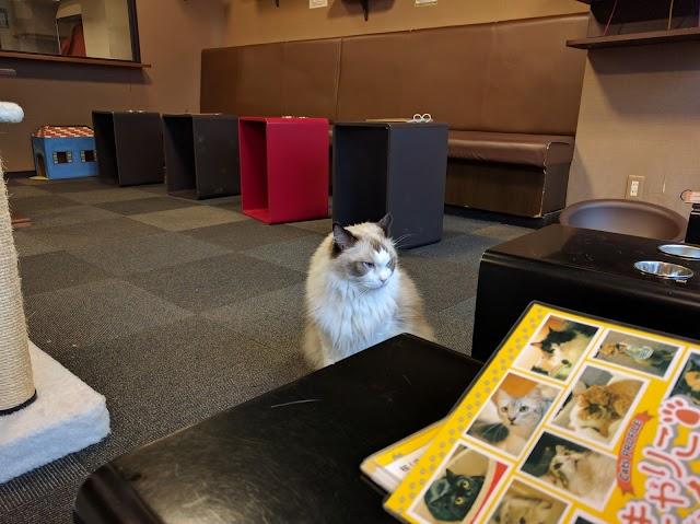Cat Cafe Calico
