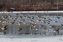Mill pond park, Newington, United States