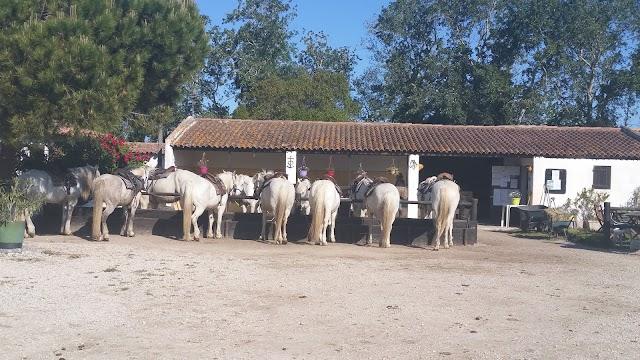 Promenade à cheval Chez Elise