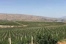 Golden Grape Armas Estate, Nor Yedesia, Armenia